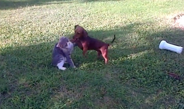Source: Youtube/Brightest Doggie