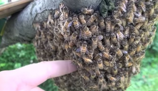 Source: Youtube/Town and Country Pest Solutions