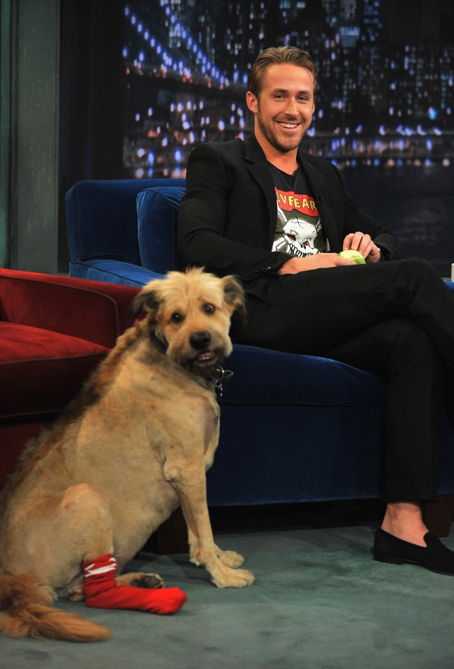 NEW YORK, NY - JULY 20: Ryan Gosling along with his dog George visits 'Late Night With Jimmy Fallon' at Rockefeller Center on July 20, 2011 in New York City.