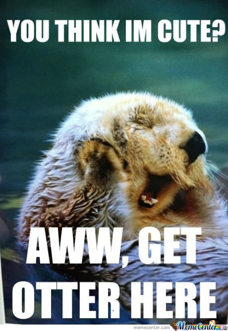 YOU THINK IN  CUTE? AWW, GET OTTER HERE