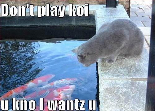 Don't play koi, u kno l wantz u