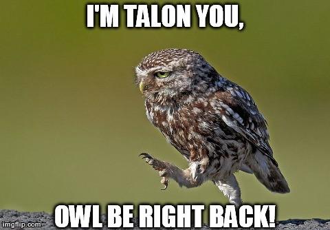 I'M TALON YOU, OWL BE RIGHT BACK!