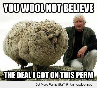 YOU WOOL NOT BELIEVE THE DEAL I GOT THIS PERM