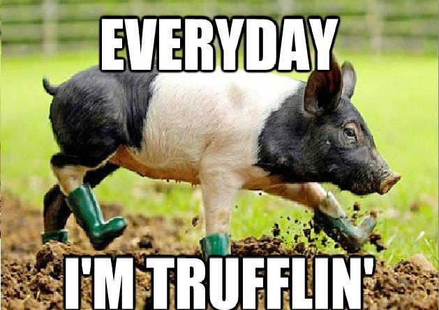 EVERYDAY I'M TRUFFLIN'