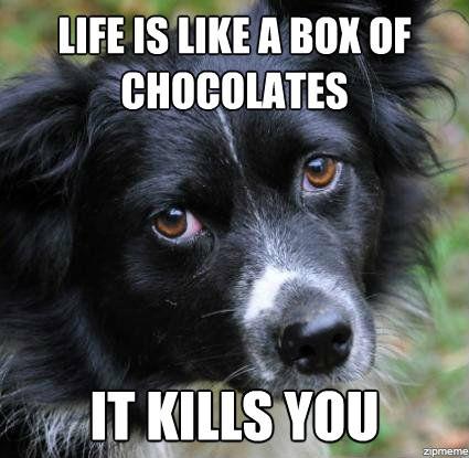 LIFE IS LIKE A BOX OF CHOCOLATES IT KILLS YOU