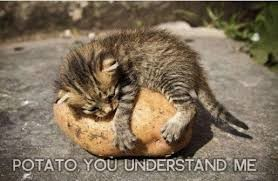 POTATO YOU UNDERSTAND ME