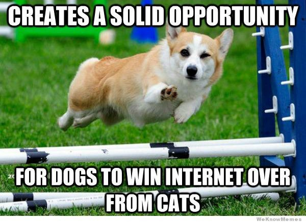 CREATES A SOLID OPPORTUNITY FOR DOGS TO WIN INTERNET OVER FROM CATS
