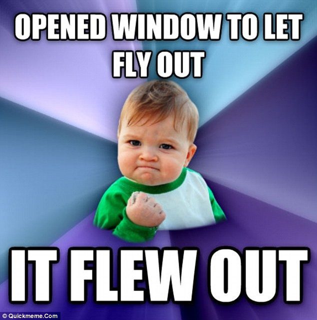 Opened window to let fly out. It flew out.