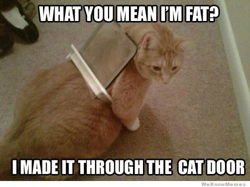 What you mean I'm fat? I made it through the cat door