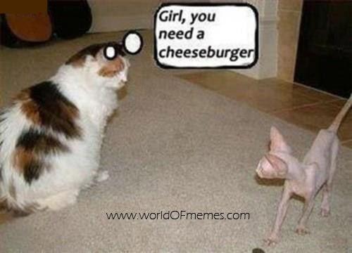 Girl, you need a cheeseburger