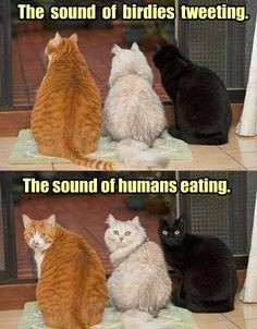 The sound of birdies tweeing. The sound of humans eating.