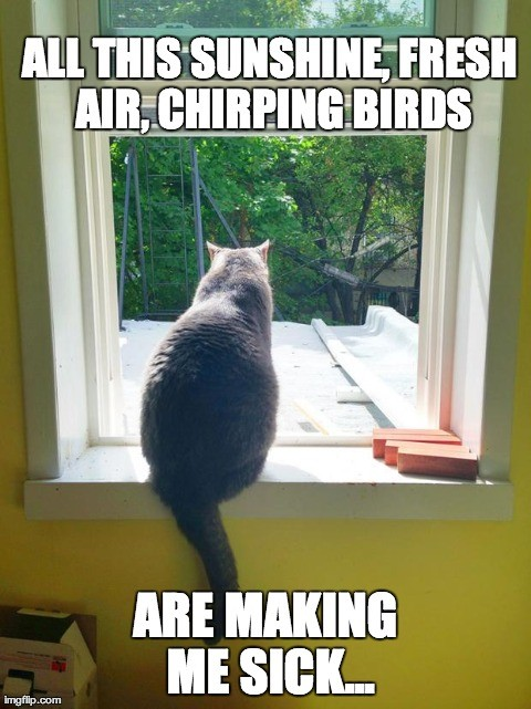 All this sunshine,freshair,churping birds are making me sick...