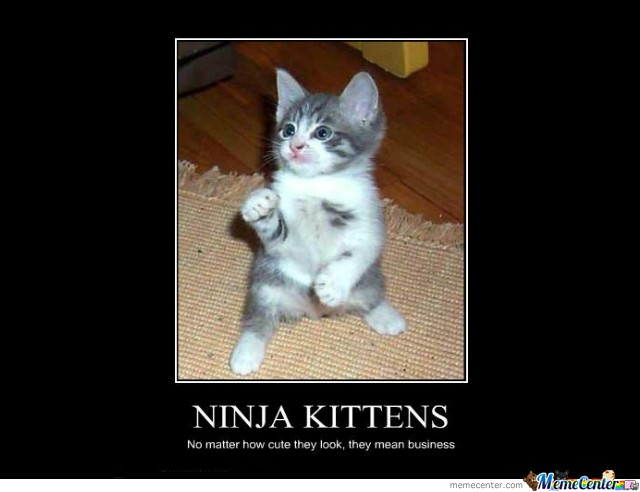Ninja Kittens Nomatter how cute they look,they mean business