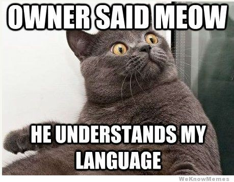 Owner said Meow. He understands my language.
