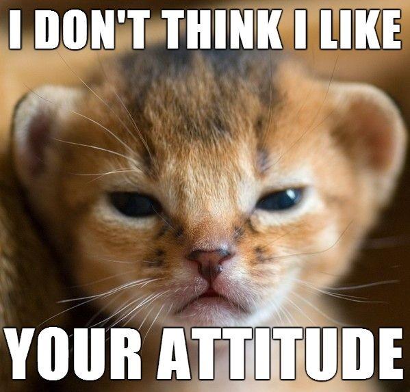 I don't think I like your attitude.
