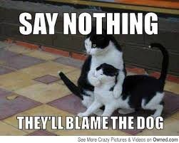 Say nothing. They'll blame the dog