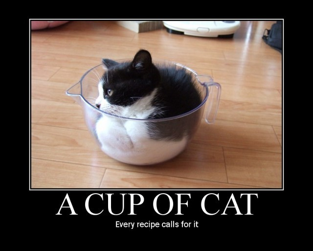 A cup of cat. Every recipe calls for it.