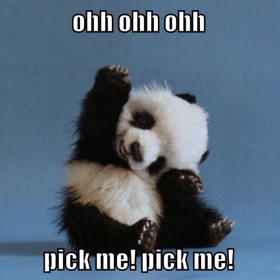 ohh ohh ohh pick me! pick me!