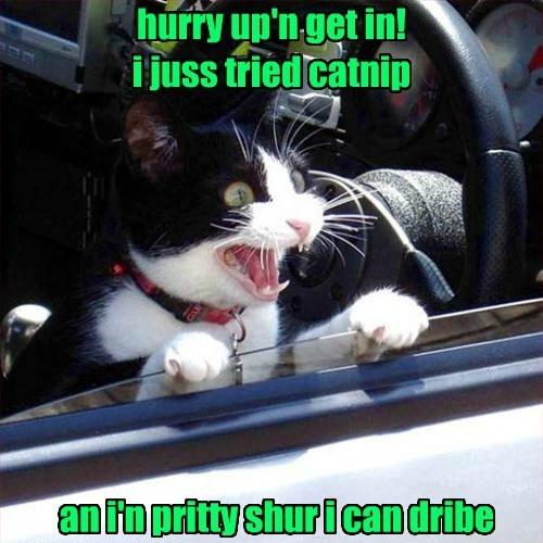 5 Hilarious Cat GIFs Make you smile