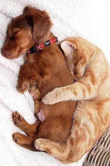 dog & cat hug