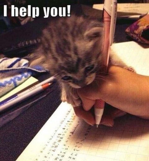 a adorable kitten helps you