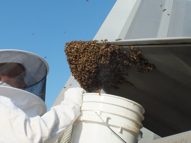 F-22 Raptor grounded by 20,000 bees