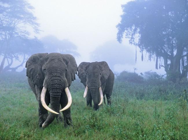 www.travelx.com/wp-content/uploads/2013/10/Ngorongoro-Conservation-Area151.jpg