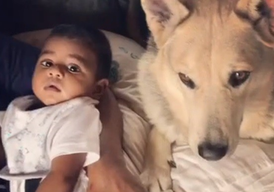 (VIDEO) Check Out the Baby's New Best Friend
