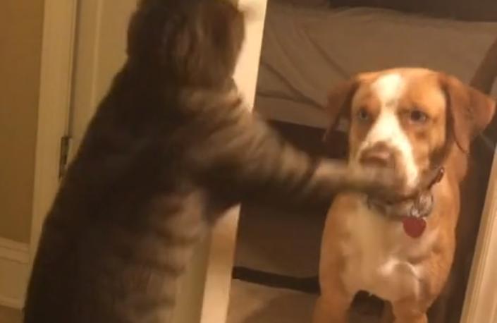 Cat Slaps Dog Face