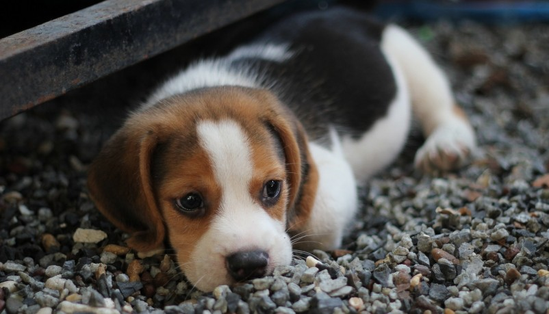 Cute Puppies of All Time