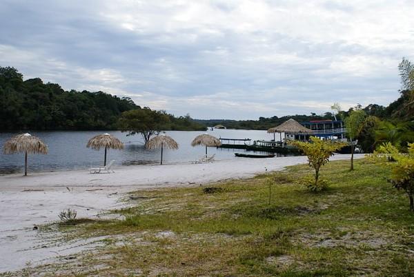 Manaus Rainforest