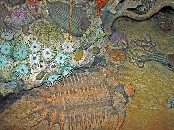 Devonian Seafloor