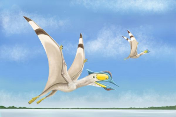Fourth Pterosaur