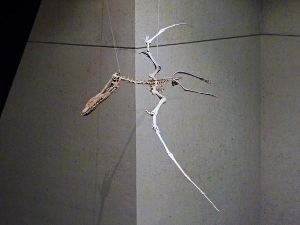 Pterosaur Bones
