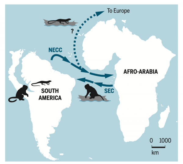 Prehistoric Monkeys from Africa to South America