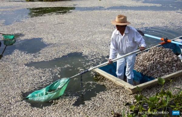 Dead Fish in Mexico