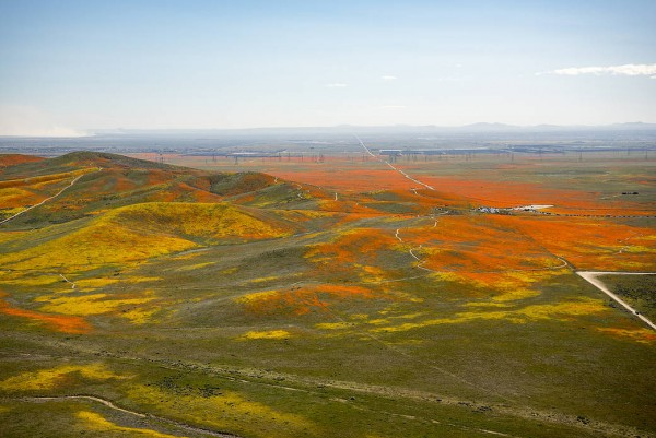 NASA photo of Superbloom