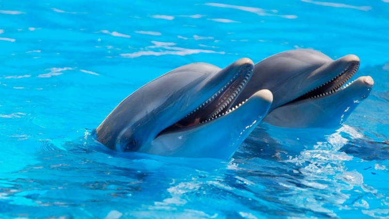 SeaWorld Pursues New Partnerships to Protect Marine Animals