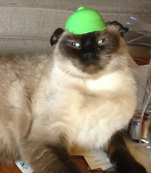 Adorable PHOTOS of cats wearing hats!  Funny  BOOMSbeat