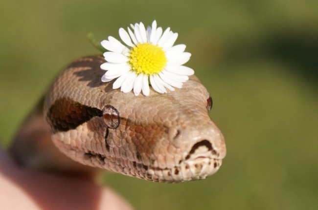 Snake with a flower (Source: Tumblr.com)