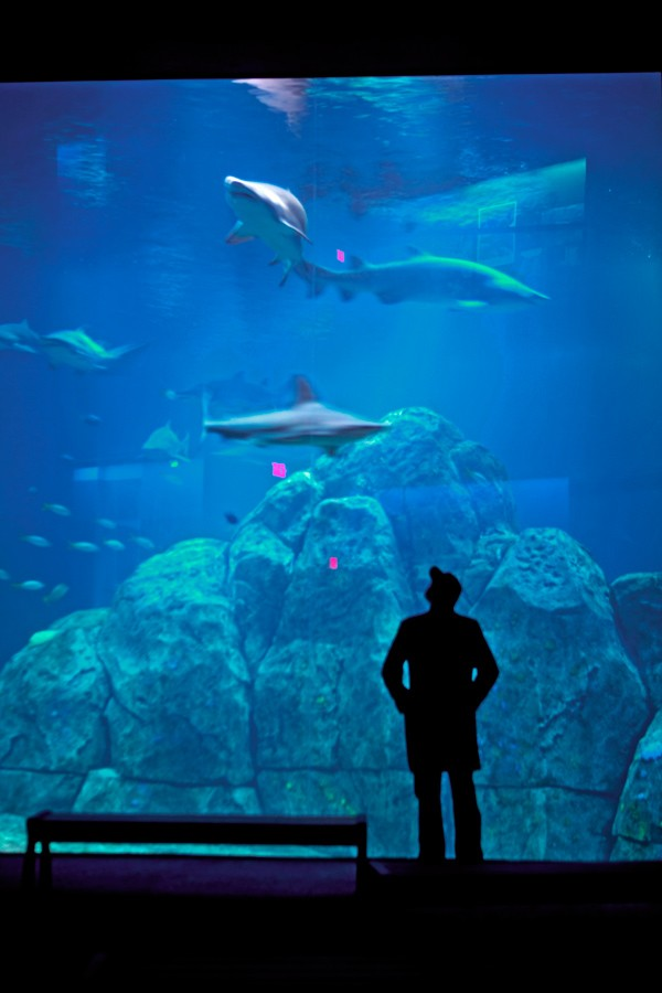 Adventure Aquarium in New Jersey, a must see | BOOMSbeat