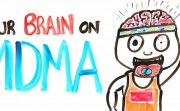 your brain and MDMA