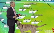 forecast with a dog