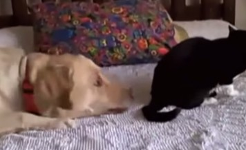 cats don't want to be friends with dogs