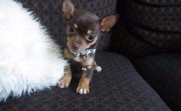 little puppy a little monster