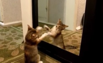animals versus mirror
