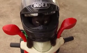 cat as a Ghost rider