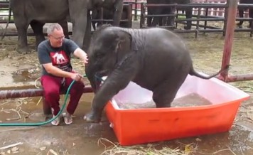 baby elephant takes a bath