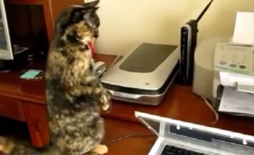 cat versus printer