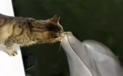 cat and a dolphin